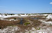 picture of gulf mexico  - Beautiful Sand Dunes on the Gulf of Mexico - JPG