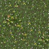 Spring Lawn with Asters. Seamless TileableTexture.