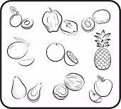 fruits vector hand drawn