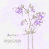 Romantic background with violet aquilegia