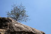 Large Rock Lone Tree Blue Sky
