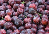Lots of plums
