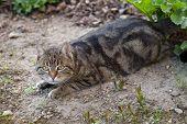 Lurking Housecat