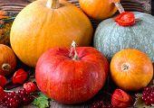 Bright Pumpkins