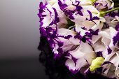 White-purple Lily