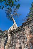 Tree grown over Ta Prohm temple, Cambodia