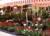 stock photo of flower shop  - Flower market in old Nice - JPG