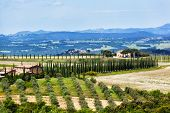 Typical Tuscan landscape with farmer houses and vineyards