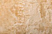 Sheepskin Jacket Texture
