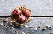 pic of bird egg  - Bird colorful egg in nest wooden background - JPG