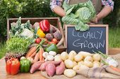 picture of farmers market vegetables  - Farmer selling organic veg at market on a sunny day - JPG