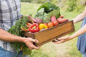 Farmer giving box of veg to customer on a sunny day poster