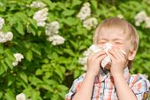 stock photo of sneezing  - The sneezing boy against a blossoming bush - JPG