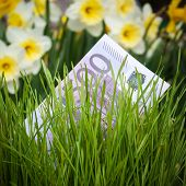 stock photo of narcissi  - Euro banknote growing in green grass - JPG