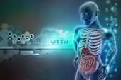 stock photo of midsagittal  - 3d rendering of  human anatomy in color background - JPG