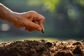 image of food plant  - Farmer - JPG