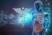 stock photo of midsagittal  - human anatomy and caduceus sign in color background - JPG