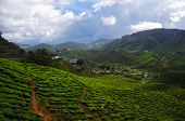 foto of cameron highland  - beautiful tea plantations in the mountains of Malaysia. mountain green tea on the slopes of mountains of the Cameron highlands