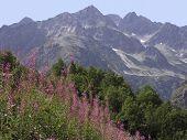 France Alps Haute Alpes Le Champsaur Region Near Gap