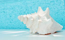 pic of conch  - white Conch shell with Blue background and copy space - JPG