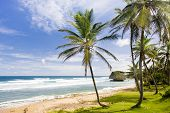 picture of greater antilles  - Bathsheba - JPG