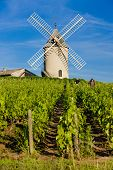 vineyards with windmill near Chenas, Beaujolais, Burgundy, France