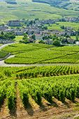 vineyards near Fuisse, Burgundy, France