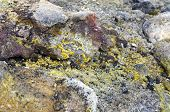 The silica, sulfur deposits, lichen and rhyolite structures of the active volcanic Krafla System in Iceland