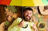 Fall Atmosphere Attributes. Hipster With Beard Mustache Expect Rainy Weather Hold Umbrella Enjoy Sea poster