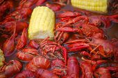 foto of crawdads  - Crawfish boil - JPG