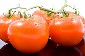 bando de tomate, tomate