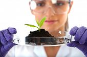 young lab assistant holds small flat dish with soil and plant, wears violet gloves, isolated on whit