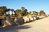 Alley Of Sphinxes, Luxor