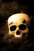 Human skull lying on top of dirt