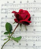 Red Rose on the music Lovely Lady