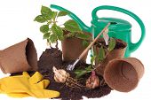 springtime  home gardering- potting plants  in peat pots