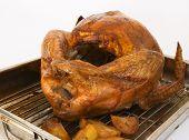 Roast turkey and potatoes still in the pan