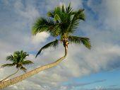 Bent Palmtree