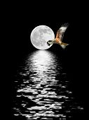 Eagle Flying At Full Moon