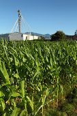 Corn Field, Grain Building Background