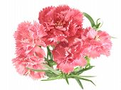 Flower Posy Of Carnations