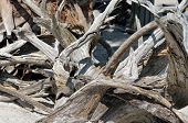 stock photo of driftwood  - Ocean Driftwood on a beach at St - JPG