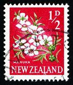 Postage Stamp New Zealand 1961 Manuka Flower, Tea Tree