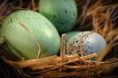 picture of easter-eggs  - easter eggs in an easter basket - JPG