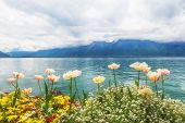 stock photo of montre  - Flowers near the Geneva lake Montreux - JPG