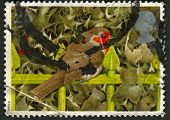 UK - CIRCA 1995: A stamp printed in UK shows image of the European Robin on Railings and Holly, circa 1995.