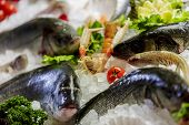 foto of ice fishing  - Seafood and fish on a display with ice - JPG