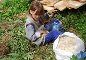The girl at the sawmill collect sawdust