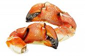 Rock  Crab Claws