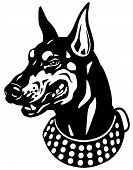 picture of doberman pinscher  - dog head  - JPG
